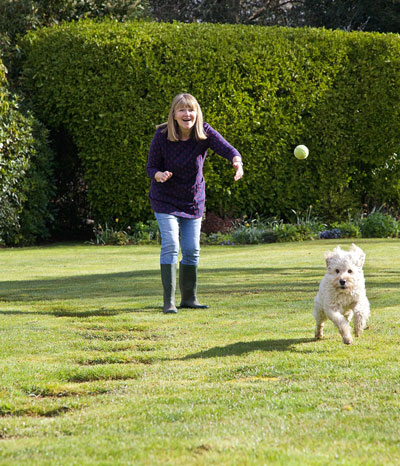 dog-home-boarding-brockenhurst